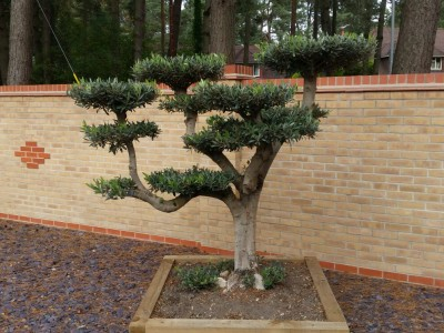 Landscaping Bournemouth