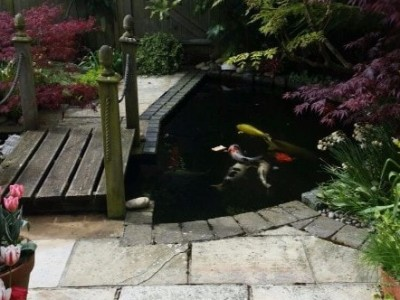 Water Gardeners in Bournemouth