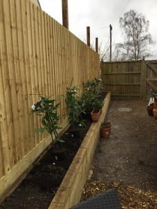 Fencing and raised bed